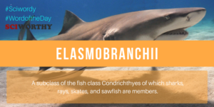 Word of the Day: Elasmobranchii