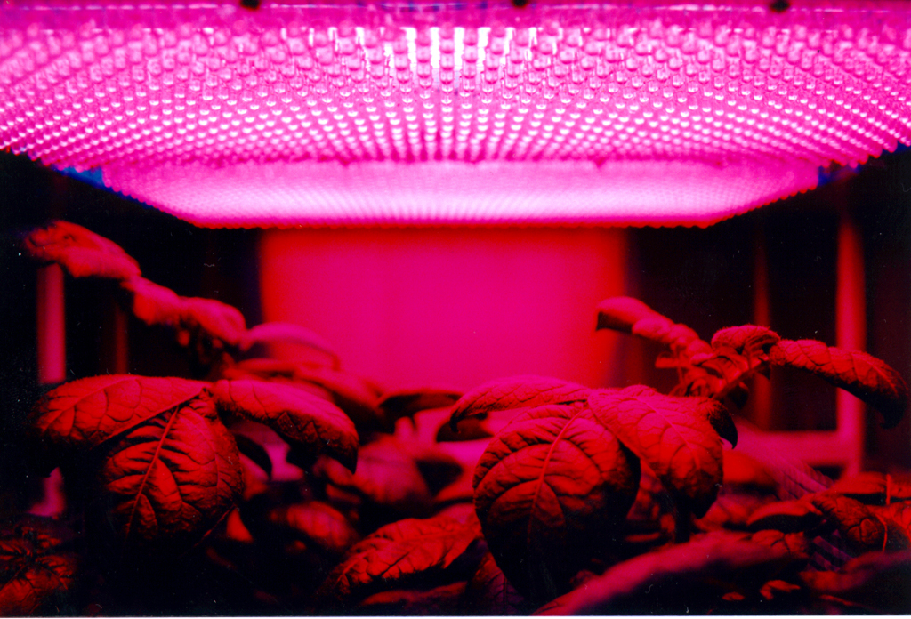 Growing Plants with Colored Light Changes Their Nutrient Content