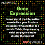 Word of the Day: Gene Expression