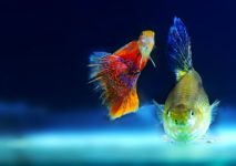 New Study Elaborates on What Aquarium Owners Already Know