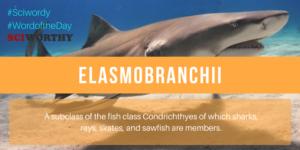 Word of the Day: Elasmobranchii