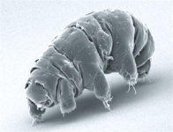 The Genetic Origins of the Water Bear, Earth's Most Resilient Organism