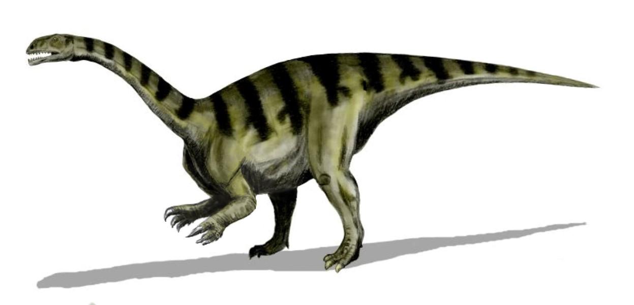 Dinosaur Brain Anatomy Helps to Clarify Evolutionary History