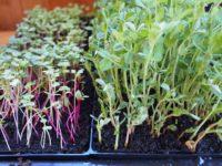Smart Farms Should Clean Their Greens
