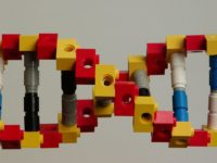 When DNA meets LEGO: Sculpting on the Nanoscale