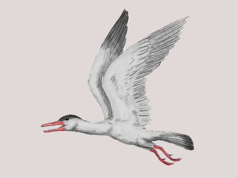 A New Transitional Bird Fossil Has Been Found