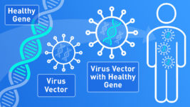 Viruses May Eventually Be Used to Deliver Gene Therapy