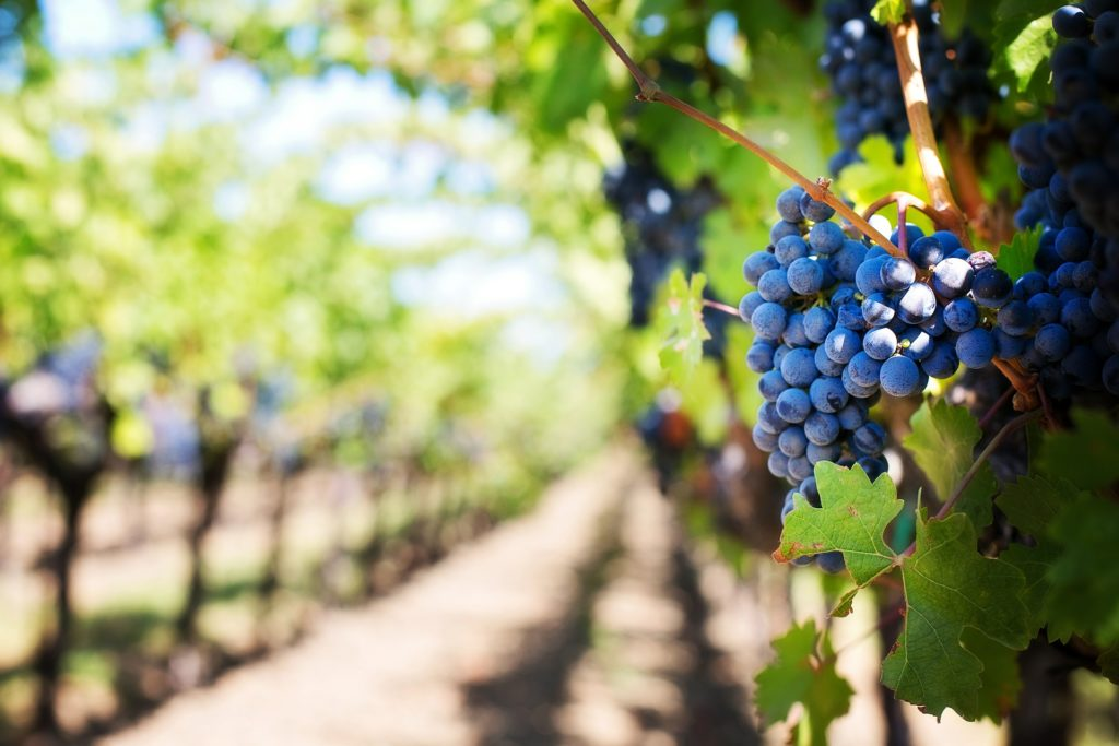 What influences the flavor of different wines?