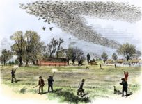 Where Have All the Passenger Pigeons Gone?
