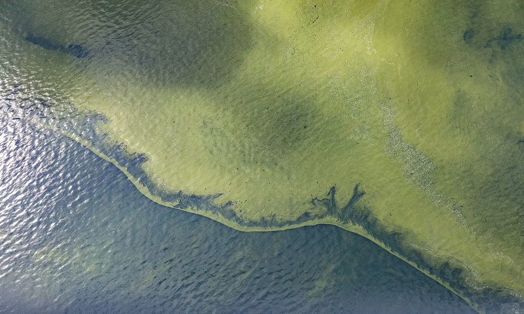Cyanobacteria can teach us about climate adaptation